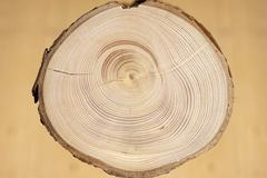 cross section of a tree trunk, norway spruce (picea abies), with annual rings - stock photo