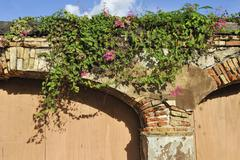 Arches, dilapidated and overgrown with russian vine or silver lace vine (fall Stock Photos