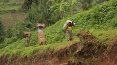 African Women from Batwa Tribe Carrying Sacks, Uganda, Africa Stock Footage