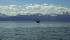 Passing Humpback Fluke HD Stock Footage