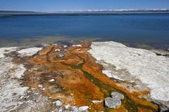 colourful thermophilic bacteria, microorganisms, west thumb geyser basin, yel - stock photo