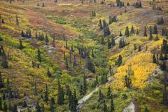 Sub alpine vegetation, leaves in fall colours, indian summer, hillside on kus Stock Photos