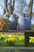 Stock Photo of milk cans and straw bales in spring, eastern holstein, germany, europe