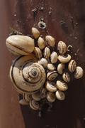 Collection of snails dried out by excessive heat Stock Photos
