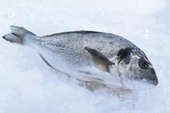 gilt-head bream or dorade royale on crushed ice - stock photo