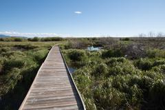 wooden footpath through riparian area - stock photo