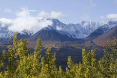 indian summer along alaska highway, leaves in fall colours, st. elias mountai - stock photo