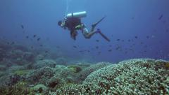 Scuba diver looking at coral reef alive with reef fish Stock Footage