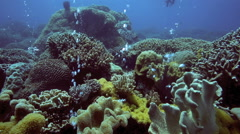 Bubbles rising from coral reef Stock Footage