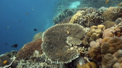 Thriving healthy coral reef Stock Footage