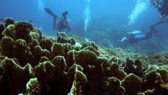 Scuba divers exploring pristine coral reef Stock Footage