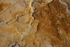 Thermophilic bacteria, microorganisms, sinter terraces at mammoth hot springs Stock Photos