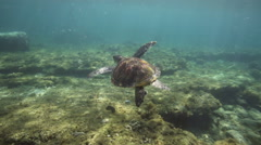 Sea turtle swimming over coral reef Stock Footage