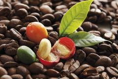 Freshly picked coffee beans on coffee beans at different stages of roasting Stock Photos