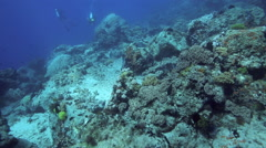 Scuba divers in fast drift dive over coral reef Stock Footage