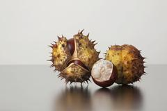 Horse chestnut (aesculus hippocastanum), fruit with and without capsule Stock Photos