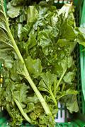 Fresh apulian rapeseed, italy, europe Stock Photos