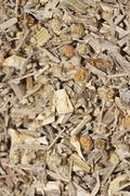 wormwood tea, organic tea - stock photo