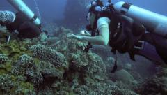 Scuba diver takes a photo of a green sea turtle Stock Footage