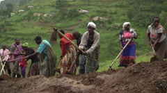 African People from Batwa Tribe Digging, Uganda, Africa Stock Footage