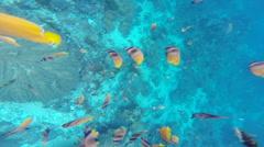 Yellow fish in Bali Stock Footage