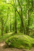 Moss-grown stone in a forest. Stock Photos