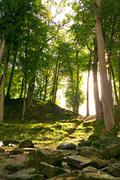 Sunshine in a forest. Stock Photos
