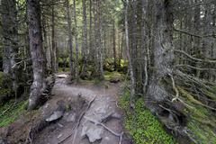 forest track, grawa alm alp, stubaital valley, tyrol, austria, europe - stock photo
