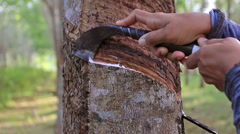 HD Footage, Close up hand of Worker tapping latex from a rubber tree, Thailand Stock Footage