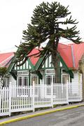 Typical house with an araucaria, port stanley, capital of the falkland island Stock Photos