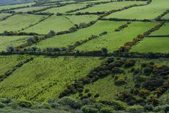 Sheep runs in lush green, encircled by hedgerows, republic of ireland, europe Stock Photos