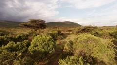 Savanna. Landscape. Aerial shot. Stock Footage