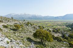 Scattered trees, holm oaks (quercus ilex), lasithi plateau, the snow-covered  Stock Photos