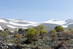 holm oaks (quercus ilex) and thornapple shrubs (crataegus), mountain forest,  - stock photo