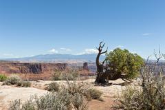 Utah juniper (juniperus osteosperma), dead horse point state park, with the l Stock Photos
