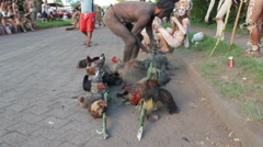 Man walking with chicks on a stick at the Tapati festival Stock Footage
