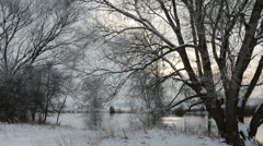 Willow tree at Havel river landscape at winter Stock Footage