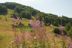 Carpathians, polonina Stock Photos