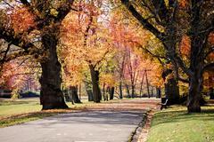 Autumn in the hofgarten in coburg, bavaria, germany, europe Stock Photos