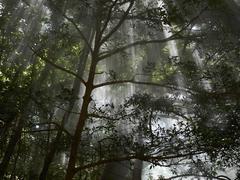 Stock Photo of sulfur-containing vapours, fumaroles, in cloud forest, ricòn de la vieja nat