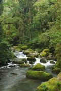 Stock Photo of rio savegre, san gerardo de dota costa rica, central america