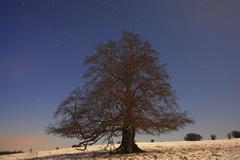 solitary beech tree in winter, long exposure with stellar orbits, mt knoten,  - stock photo