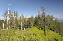 Stock Photo of taiga, boreal forest, lake baikal, siberia, russian federation, eurasia