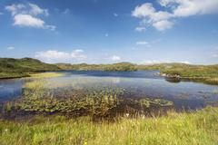 water lily leaves (nymphaeaceae) and water grasses at loch na claise fearna n - stock photo