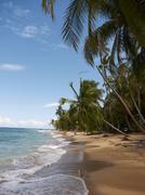 palm grove on the secluded beach of punta uva, puerto viejo de talamanca, cos - stock photo
