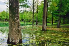 wetland of hualian in taiwan, china, asia - stock photo