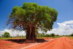 baobab tree on red soil road, kenya, africa - stock photo