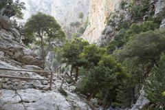Hiking trail with a railing made of wood, scattered trees, holm oaks (quercus Stock Photos