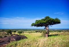 Stock Photo of savanna landscape in africa, serengeti, tanzania