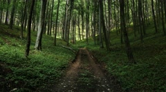 4K Lush Deciduous Summer Forest 1 road Stock Footage